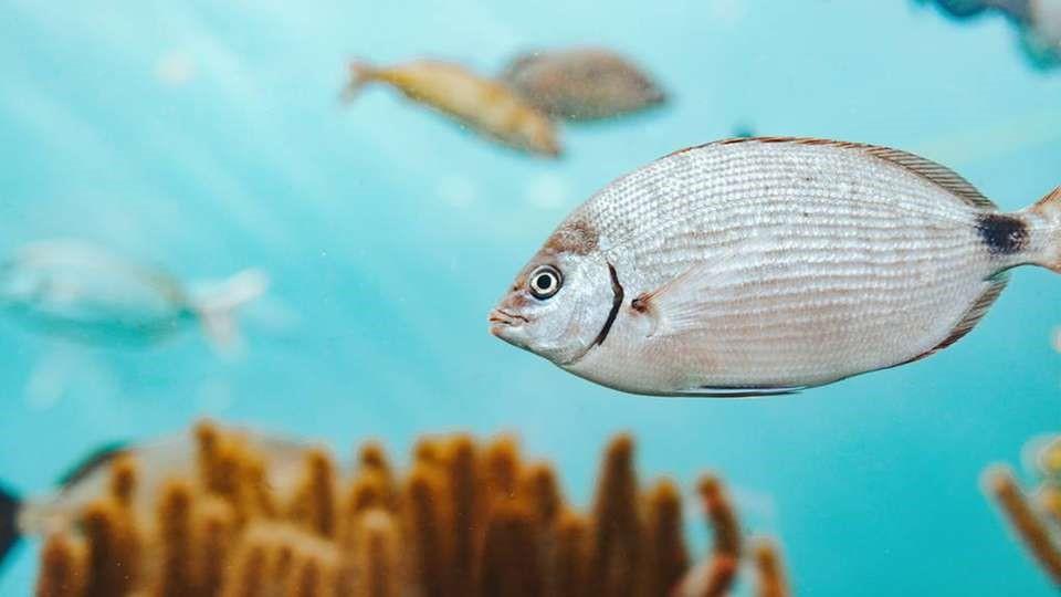 Защита от перелива при измерении уровня в масляных танках с рыбьим жиром